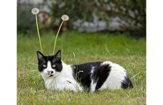 39 Perfectly Timed Photos Of Cats That You Won't Believe Are Real (Slide #64) - Pawsome