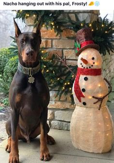 Doberman Love, Doberman Pinscher Dog, Best Bud, True Nature, Dobby, Puppy Love, Cute Puppies, Doggies, Dog Lovers