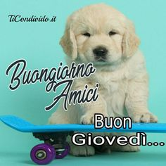 Good Night, Good Morning, Labrador Retriever, Facebook, Anime, Genere, Cardio, Pictures, Nighty Night