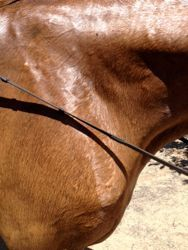 How to cool out a sweaty horse in chilly or cold weather!  visit proequinegrooms.com