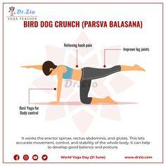 upward plank pose yoga pose  dr zio in 2020  plank pose