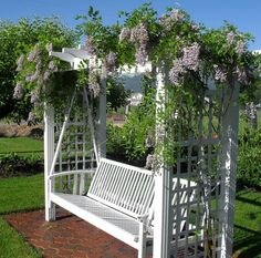 ☆Wisteria looking lovely on an adorable swing - Love, Love, Love ……This !!