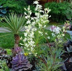 danger garden: Lomatia tinctoria is my favorite plant in the garden, this week…