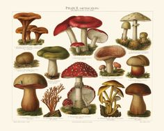 One of two spectacular renderings of mushrooms, champignons, funghi, and more!
