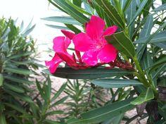 Flower in grand cayman