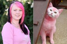 Pets# Pet supplies # Pink Cat to be Returned to Owner, click the link below if you want to know how this cat has pink hair  http://emarketinghonestreviews.com/DogHairDyeGel
