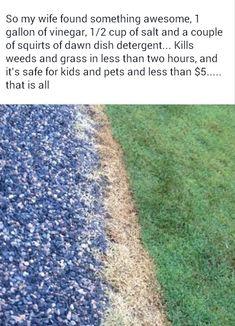 DIY Weed killer (safe for kids & pets)
