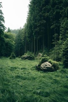 Forest fields, like a green natural wonderland. - Forest Field - Landscape Photography Art Print by regnumsaturni Beautiful World, Beautiful Places, Beautiful Forest, Beautiful Pictures, Landscape Photography, Nature Photography, Photography Ideas, Nature Aesthetic, Aesthetic Green