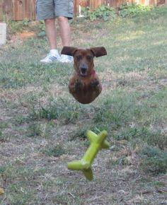FLY! #dog