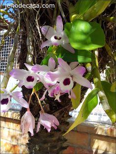Novas flores em casa... - Jeito de Casa - Blog de Decoração