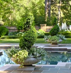 Limestone planters around pool | Topiary | Green on green | Large container garden | Container planting