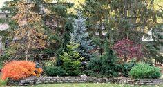 landscape berms | conifer garden idea