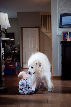 My 7 month old son was sitting playing when my wife's Great Pyreneese walked up and sat beside him.