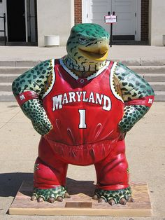 Maryland Terps!