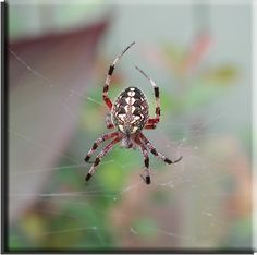 Homeowners Guide to Spiders Reference File - Discusses Several Common Spider, Dispels Myths, How to Minimize Exposure, etc.