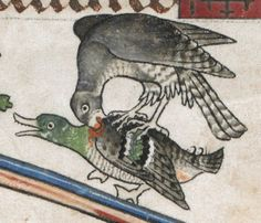 The Alphonso Psalter, folio 14r. Hunting scene, what I think is a Honey Buzzard catches a Mallard Duck. Sometimes known as the Tenison Psalter. origin is likely Westminster or London, England. Dated tot 1284-1316.