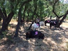 Lîle Aux Poneys à Agde : Balade à poney pour 1 ou 2 personnes: En promotion à 8.00€. Des balades à poney pour découvrir cet animal et…
