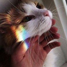 "- Follow my personal @itsbloodyspg (Only accepting close friends) -  www.SoAestheticShop.com  Coupon code 10% off "" SPG ""  Link in bio ⬆ - #gay #gaylike #gaylove #gaypride #gayquote #lovequote #lgbt #lgbtq #lgbtyouth #lgbtqa #lgbtcommunity #quote #quotes #lesbian #bi #bisexual #trans #transsexual #pansexual #transgender #pride #lovewins #loveislove #secretlyprettygay"