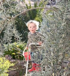 Picking olives today! We have 8 olive trees to pick so that we can make our own olive oil  #oliveoil #olives #selfsustaining