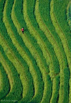 Long sheng rice terraces,Guilin, China