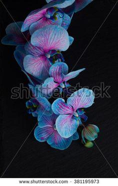 Stock Images similar to ID 368765855 - white jasmine flower. the...