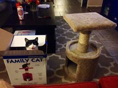 This cat who whined about a cat tree for years, got it, and then just sat in the frickin� box. | 31 Cats Who Just Want To Watch The World Burn