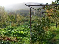 Reitoral de Chandrexa, Galicia. We serve homemade organic food in the dining room. The house has its own registered organic 2500 square metre kitchen garden, which produces the vegetables we eat http://www.organicholidays.co.uk/at/2091.htm