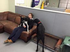 new friends #dogsitting #doggydaycare #dogs #playtime