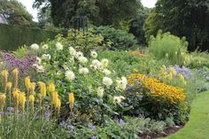 Kniphofia 'Buttercup' & Dahlia 'Shooting Star' in the Blue and Yellow Border