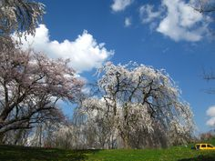 Ault Park, Cincinnati  Taken by M Torigian, Mar '12 Would like to have a few of the trees in my back yard!!