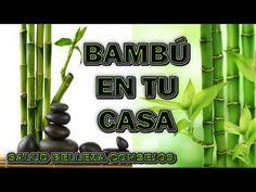 LLEVA BAMBU A TU HOGAR Y MIRA QUE SUCEDE - YouTube Feng Shui, Money Lei, Nintendo Wii, Deco, Youtube, Gardens, Home, Lucky Bamboo, Bamboo Plants