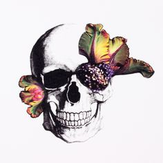 Blooming Skull Card 12 Pack by D.L. & Co.
