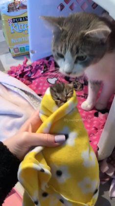 Cute baby animals, cute funny animals, funny cats, animals and pets, cu Cute Baby Cats, Cute Little Animals, Cute Cats And Kittens, Cute Funny Animals, Kittens Cutest, Funny Cats, Ragdoll Kittens, Bengal Cats, Kitty Cats