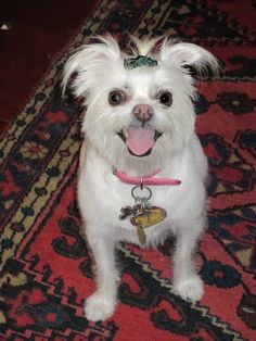 Quotes from Stephie Pahlavi Zan: My Dog Chloe