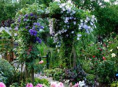 Rosenbogen - Frühling bis Herbst 2008 - Rosen und mehr - Mein schöner Garten online