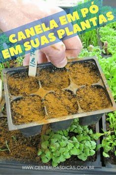 Canela nas plantas Mas não pense que somos os únicos que podem desfrutar das vantagens da canela. As plantas também podem. Não sabia? Pois é, ela também é ótima para as plantas! Por ser um fungicida natural, que ajuda a combater fungos, ela pode proteger as plantas. Conheça alguns benefícios: