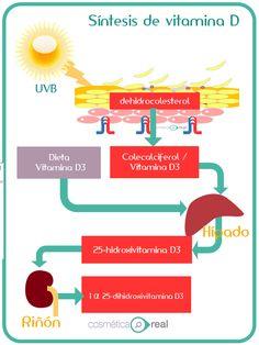Vitamina D y protectores solares en invierno: Controversia Protector Solar, Beauty Care, Natural Skin, Medicine, Skin Care, Nursing, Spa, Study, Massage Therapy