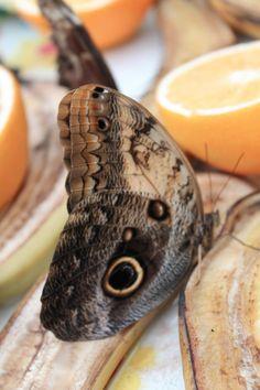 Twitter / lspratley2: A trip to @NHM_London Butterfly ...