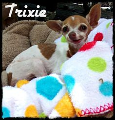 Trixie - RIP sweetest