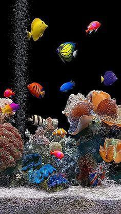 We can offer you many species of live aquarium plants. You will be able to design and create your own unique aquarium world filled with green plants. You can arrange with them beautiful aquascape. Marine Fish Tanks, Marine Aquarium, Live Aquarium, Saltwater Aquarium Fish, Saltwater Tank, Freshwater Aquarium, Tropical Fish Aquarium, Fauna Marina, Beautiful Sea Creatures