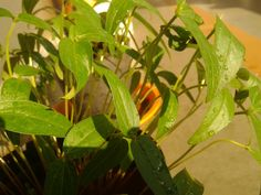 Wow....Nature of Plants in sunlight