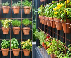 Hay que recordar que el huerto vertical debe tener un mínimo de 2 o 3 horas de sol al día, para que las plantas crezcan correctamente.