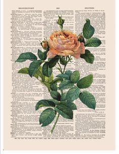 Items similar to Pink rose flower print on music or dictionary page COUPON SALE Dictionary art print Wall decor Sheet music print Digital art print No. Book Page Art, Book Art, Pink Rose Flower, Newspaper Art, Dictionary Art, Hippie Art, Anatomy Art, Arte Pop, Art Inspo
