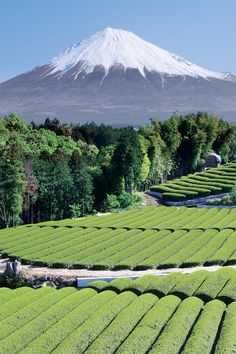 Japan, Mount Fuji  Travel Japan multicityworldtravel.com    I'd love to climb some of this a view it's majestic beauty