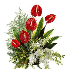 Basket arrangement of 5 anthurium and 4 white orchids along with lots of greens.