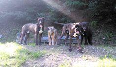 - Torino con Nico, Logan e Peja Logan, Animals, Animales, Animaux, Animal, Animais