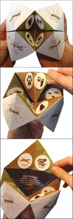 Animal Tracking Game Craft Kit for Kids