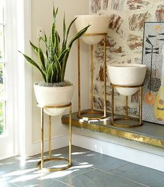 """Could These Stunning Plants Be the Next Fiddle-Leaf Fig? via @MyDomaine Also known as """"the mother-in-law's tongue,"""" this low-maintenance sansevieria is another great indoor plant for homeowners lacking a green thumb. If you forget about it, don't stress; these plants can go for a month without water. Its firm, super-straight leaves come in a variety of colorways and shapes and make for a great, bold look that is complemented with a designer planter."""