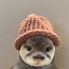 Pin by Jakob Lang on Süße Tiere Cute Little Animals, Cute Funny Animals, Funny Cute, Otters Cute, Baby Otters, Baby Sloth, Fluffy Animals, Animals And Pets, Fluffy Cows