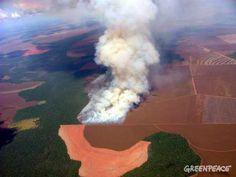 Una victoria in extremis para la selva amazónica | Greenpeace España